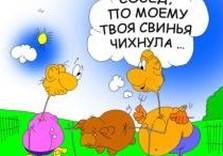 свиной грипп карикатура