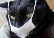 кот в марлевой повязке