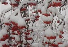 снегопад дерево в снегу