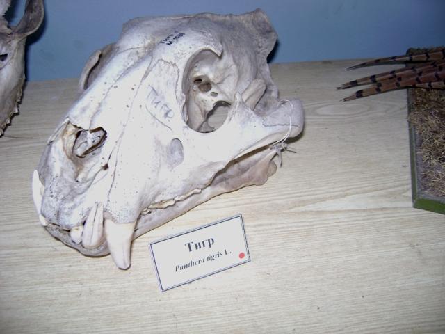 фото чучела рыси