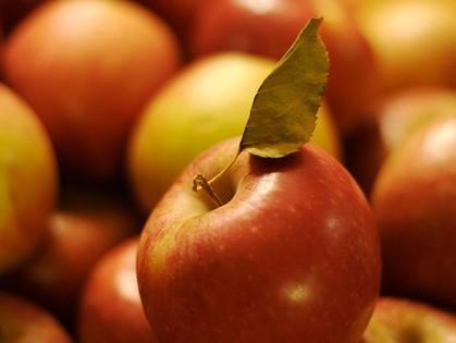 Не зря яблочки издавна молодильными называли...