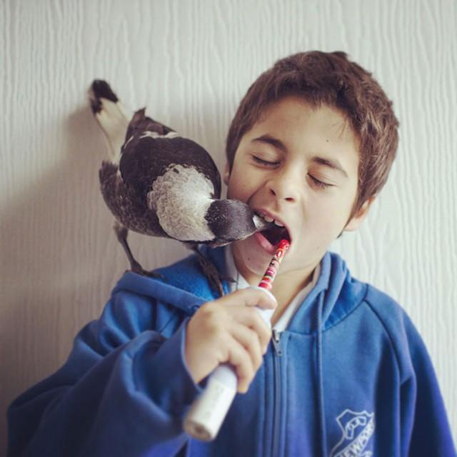 soroka-pinguin-2
