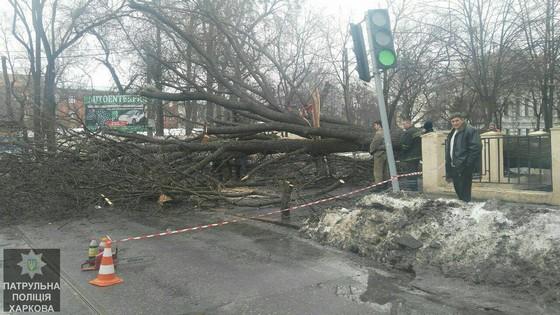 Вцентре Харькова рухнувшее дерево перегородило дорогу