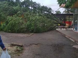 Кроной дерево задело киоск