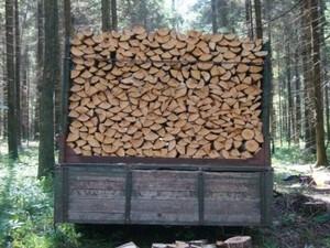 Лес на сумму более 61 миллиона был вырублен