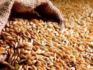 «Новый» владелец не дает фермеру возможности вывезти зерно